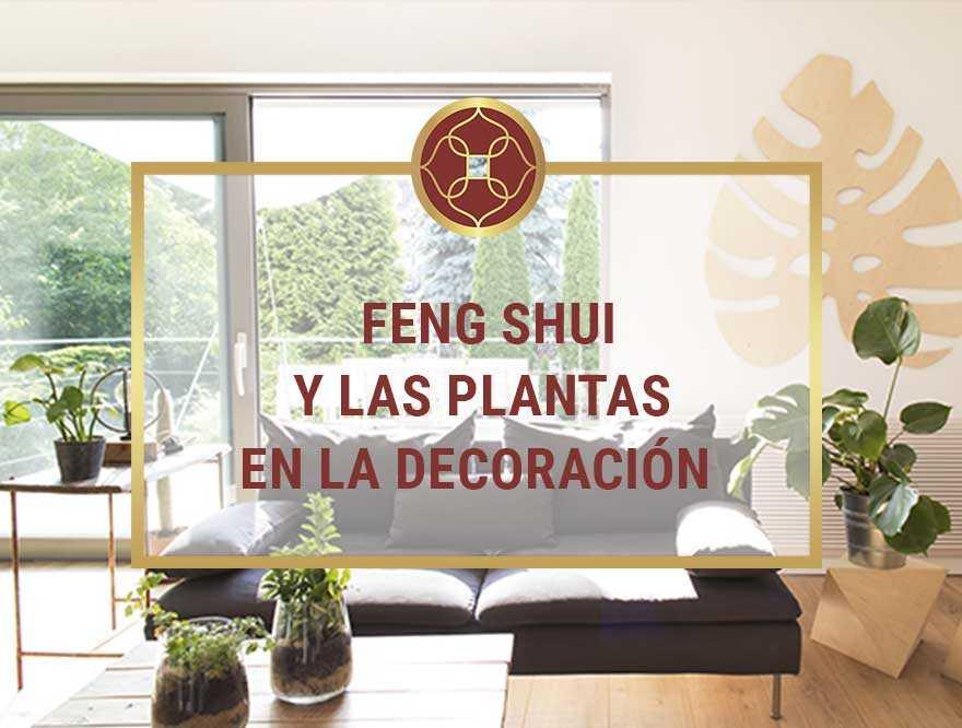 Feng-Shui-y-las-Plantas-Recomendables-para-la-Decoracion
