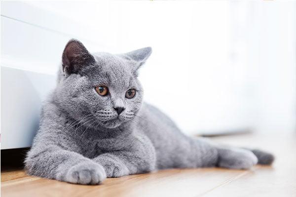 Las geopatías y los gatos