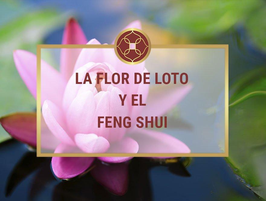 La Flor de Loto y el Feng Shui