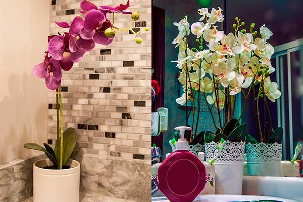 La flor de la Orquidea en Feng Shui