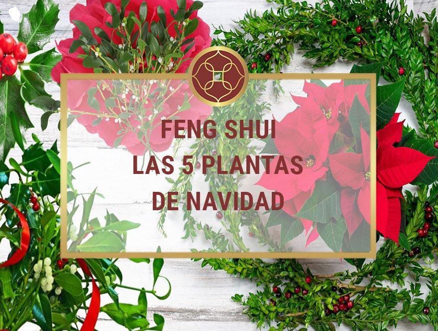 Plantas de Navidad con Feng Shui